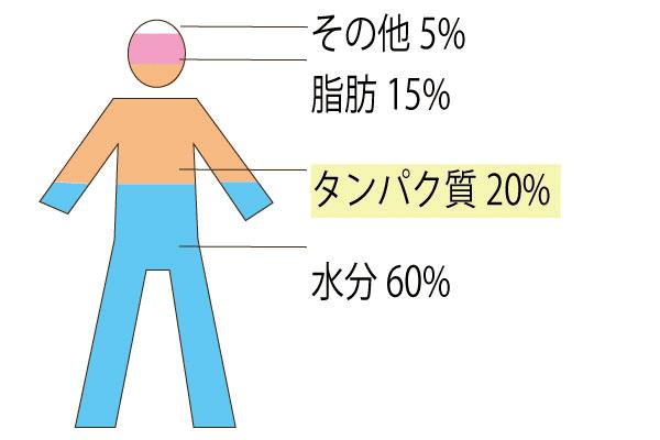 人間の水分量